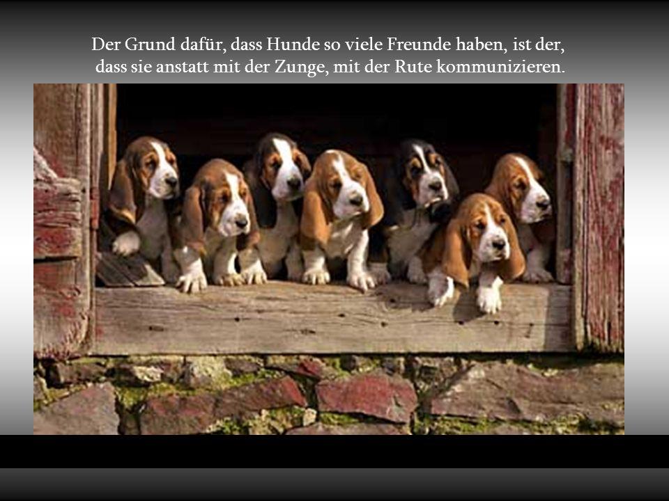 Der Grund dafür, dass Hunde so viele Freunde haben, ist der,
