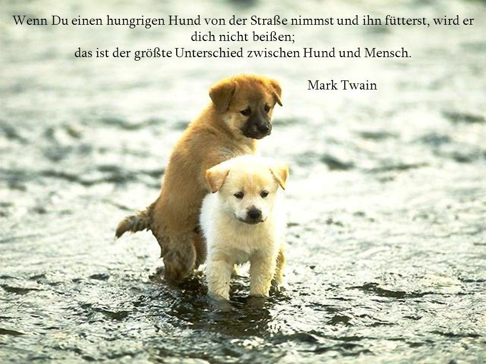 das ist der größte Unterschied zwischen Hund und Mensch.