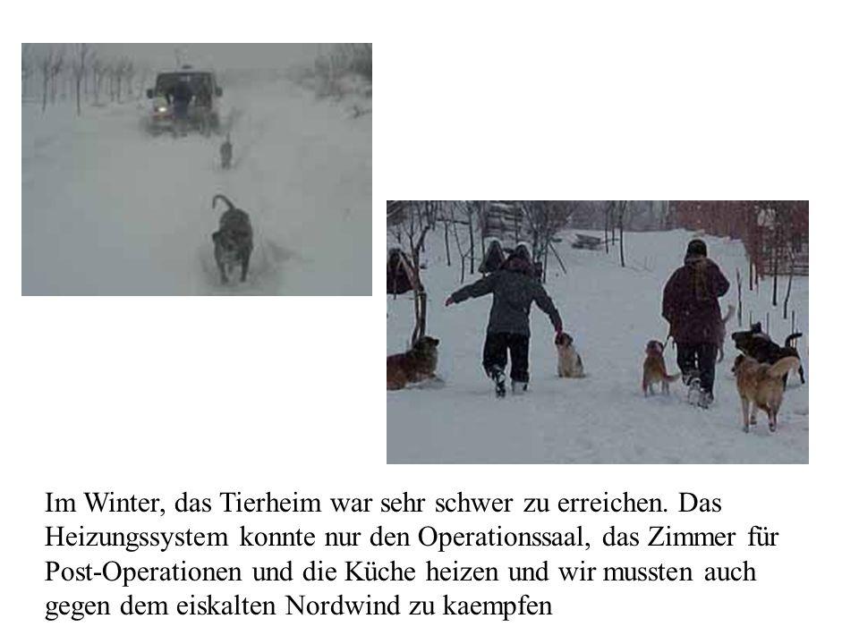 Im Winter, das Tierheim war sehr schwer zu erreichen