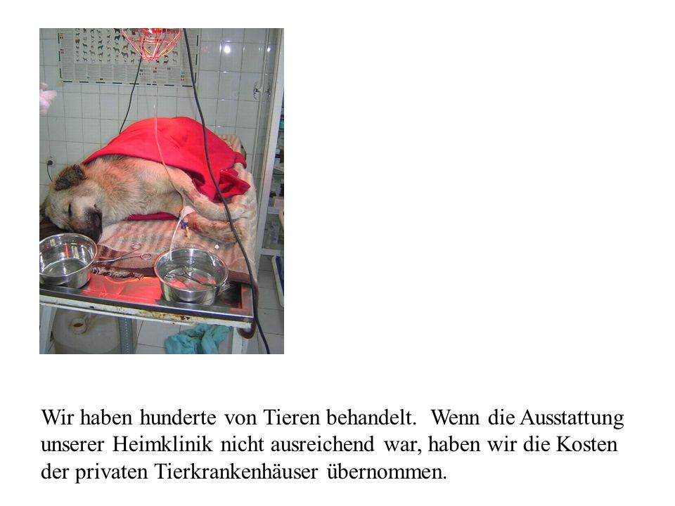 Wir haben hunderte von Tieren behandelt