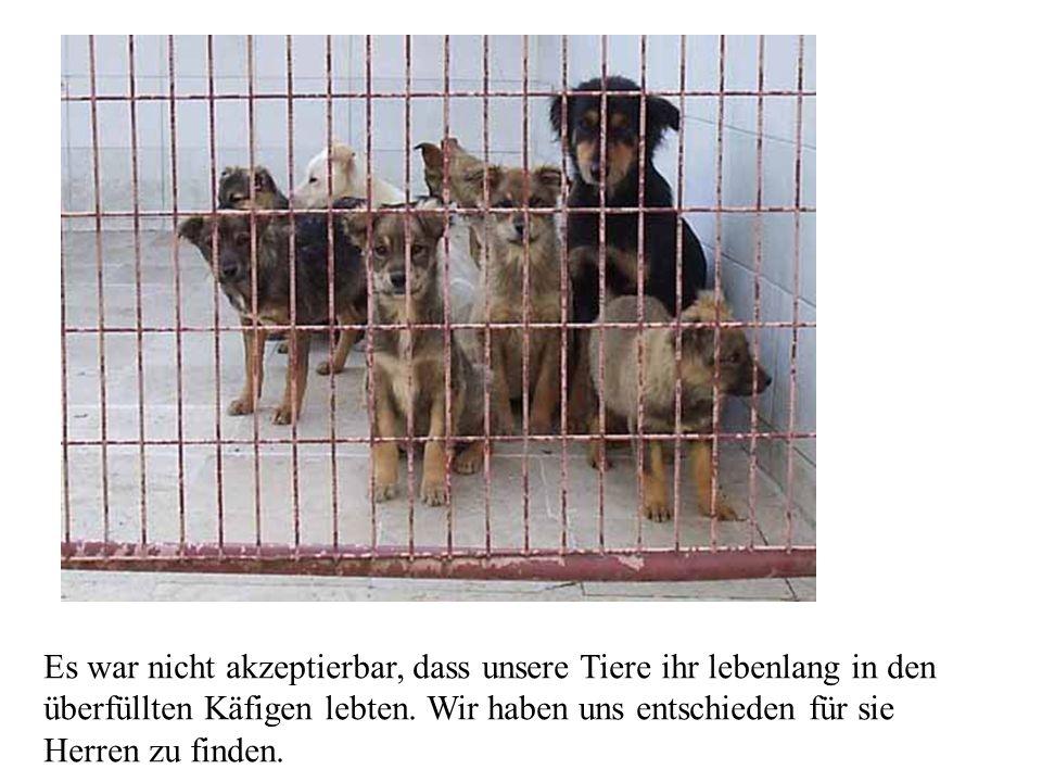 Es war nicht akzeptierbar, dass unsere Tiere ihr lebenlang in den überfüllten Käfigen lebten.