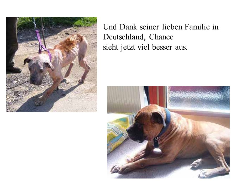 Und Dank seiner lieben Familie in Deutschland, Chance