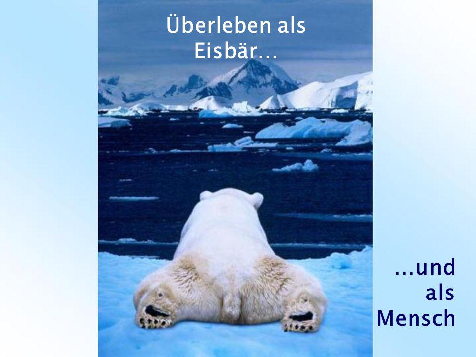 Überleben als Eisbär… …und als Mensch