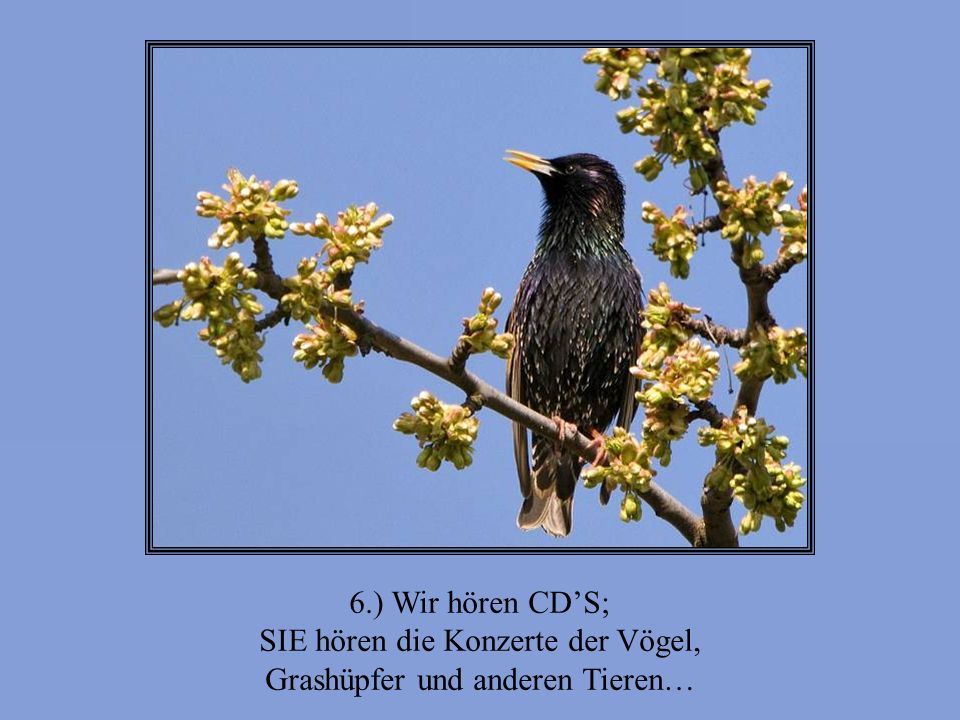 SIE hören die Konzerte der Vögel, Grashüpfer und anderen Tieren…