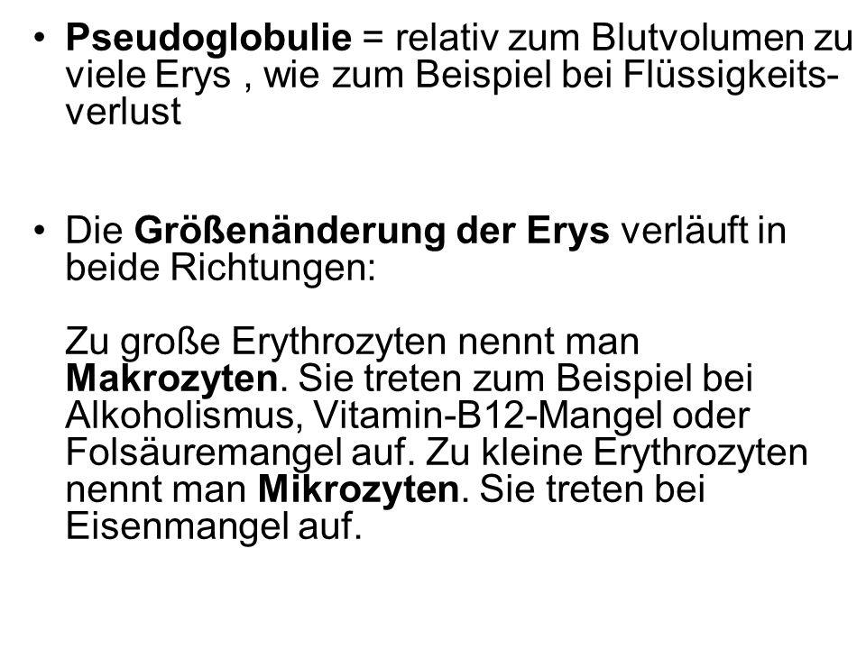 Pseudoglobulie = relativ zum Blutvolumen zu viele Erys , wie zum Beispiel bei Flüssigkeits-verlust