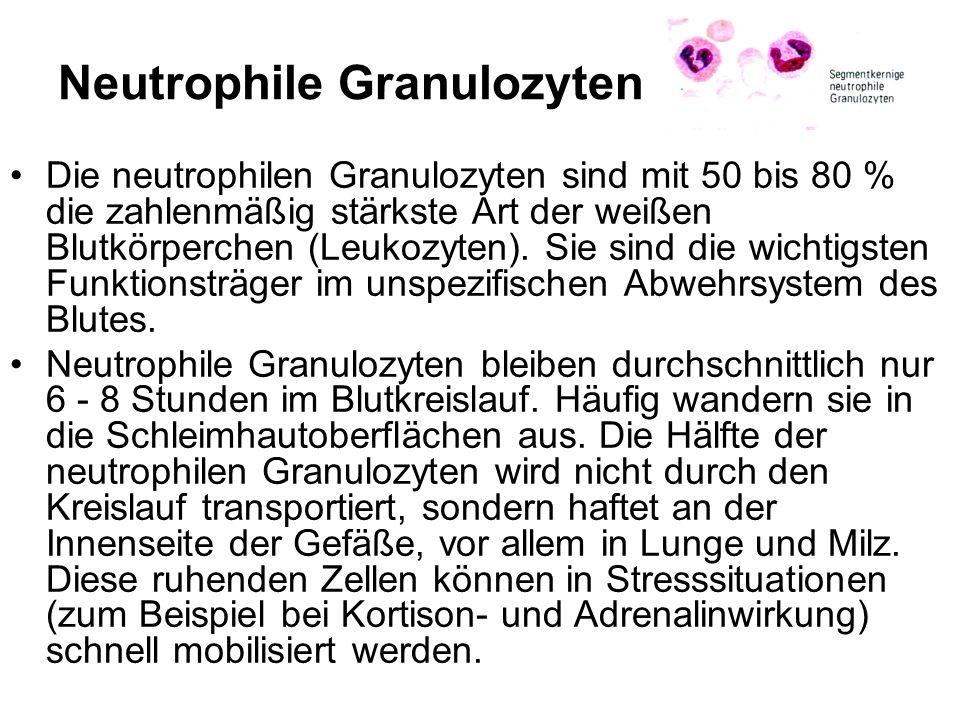 Neutrophile Granulozyten