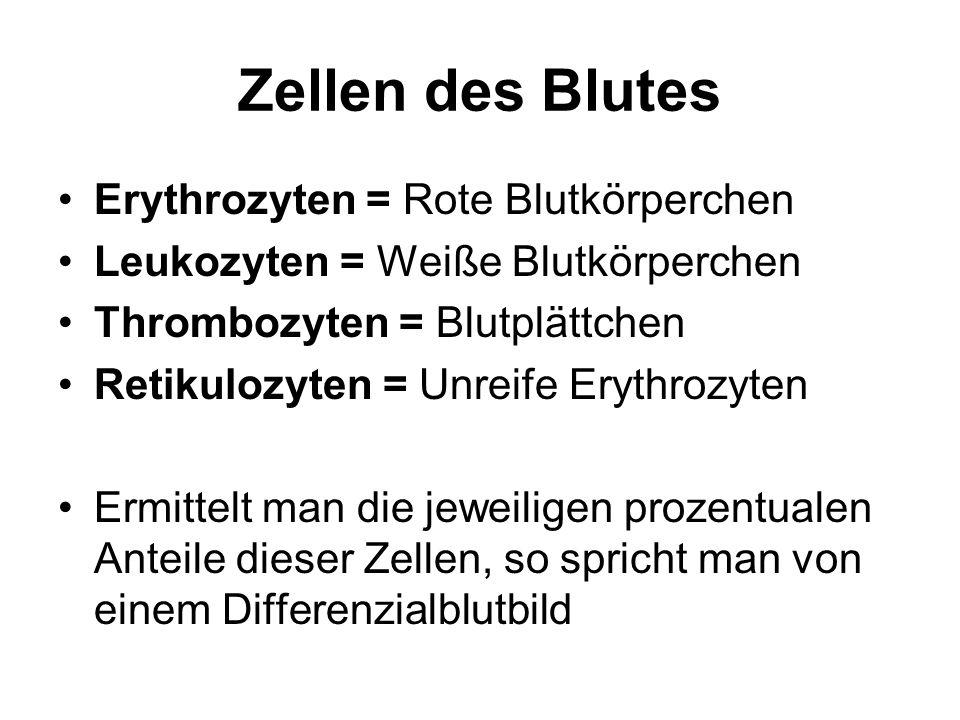 Zellen des Blutes Erythrozyten = Rote Blutkörperchen