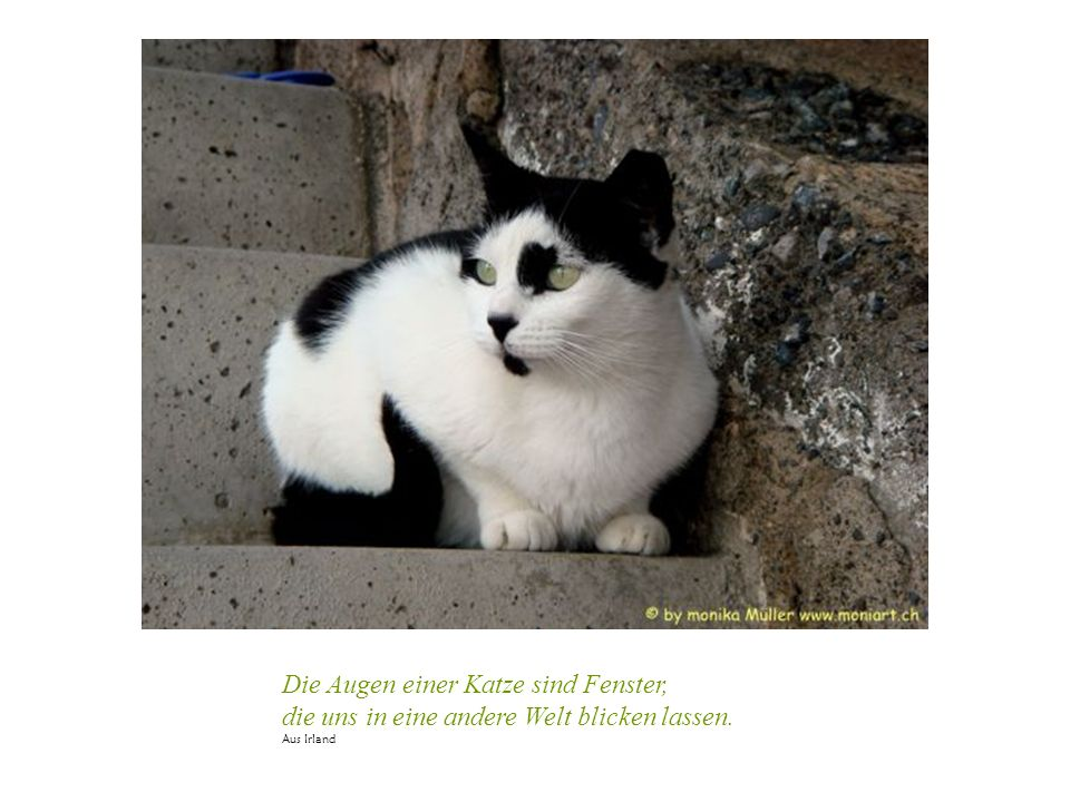 Die Augen einer Katze sind Fenster, die uns in eine andere Welt blicken lassen. Aus Irland