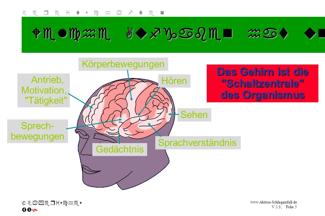 Das Gehirn ist die Schaltzentrale des Organismus