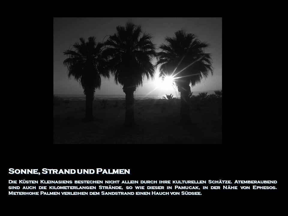 Sonne, Strand und Palmen