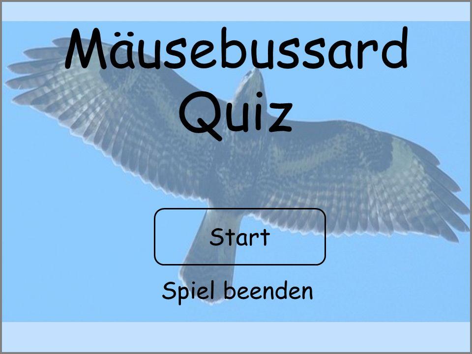 Mäusebussard Quiz Start Spiel beenden