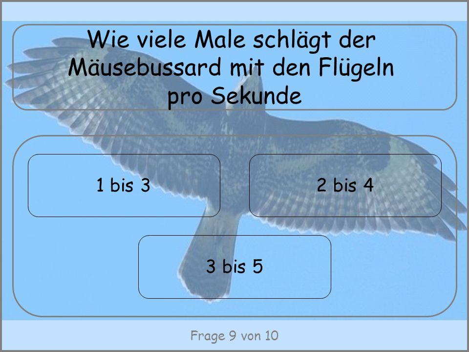 Wie viele Male schlägt der Mäusebussard mit den Flügeln pro Sekunde