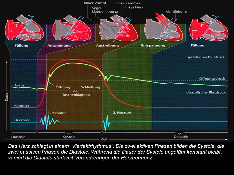 Herzzyklus: Druck-Volumen-Zeit-Diagramm eines Herzzyklus (beginnend mit der Füllungszeit).