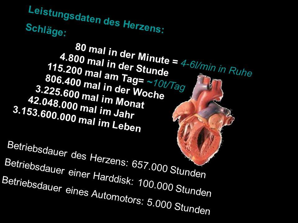 Leistungsdaten des Herzens: