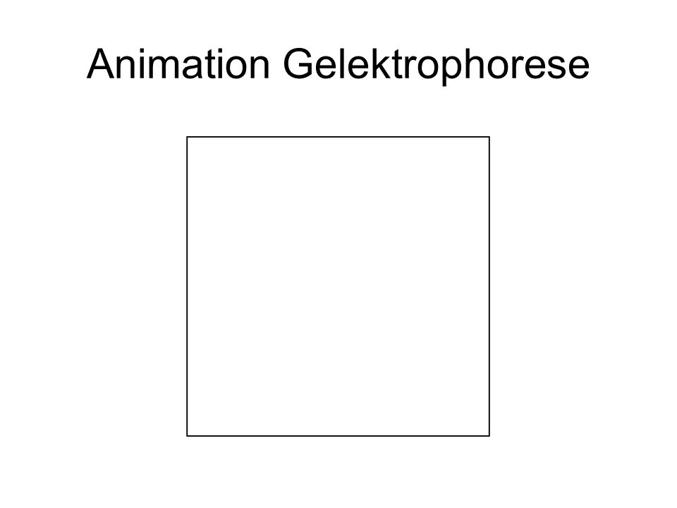 Animation Gelektrophorese