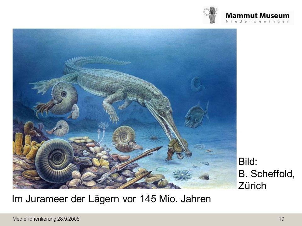 Im Jurameer der Lägern vor 145 Mio. Jahren
