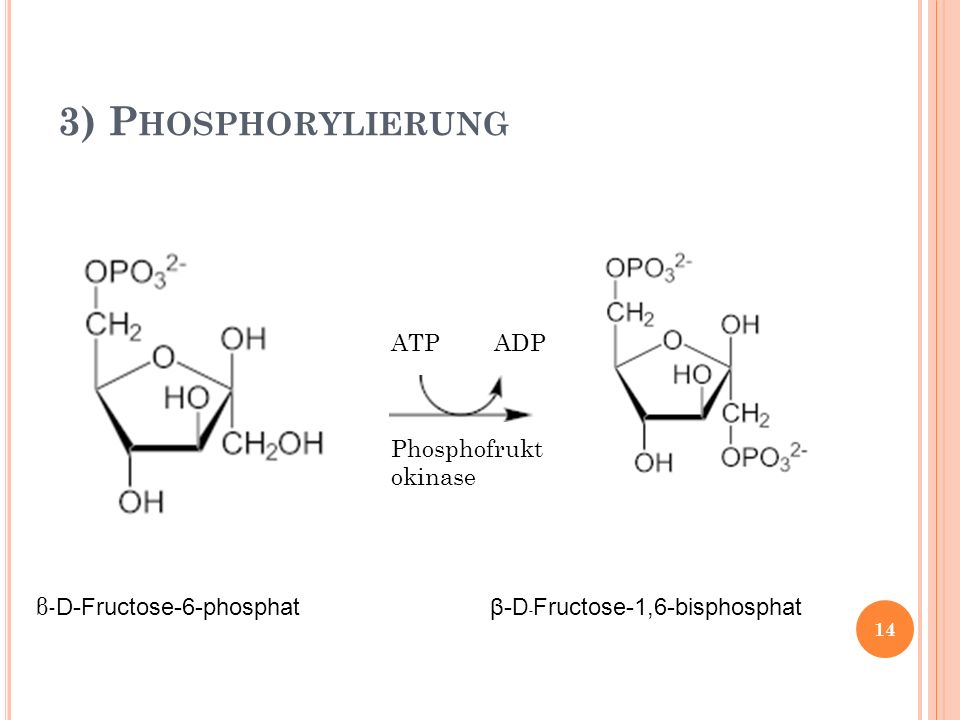3) Phosphorylierung β-D-Fructose-6-phosphat ATP ADP
