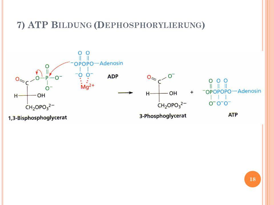 7) ATP Bildung (Dephosphorylierung)