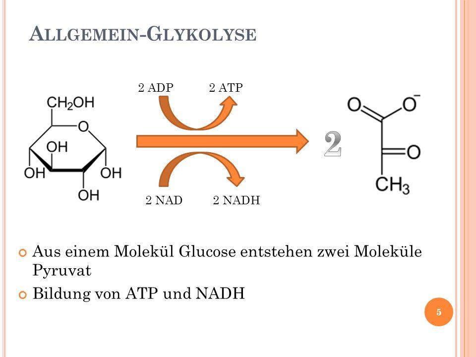 Allgemein-Glykolyse 2 ADP 2 ATP. 2. 2 NAD 2 NADH. Aus einem Molekül Glucose entstehen zwei Moleküle Pyruvat.