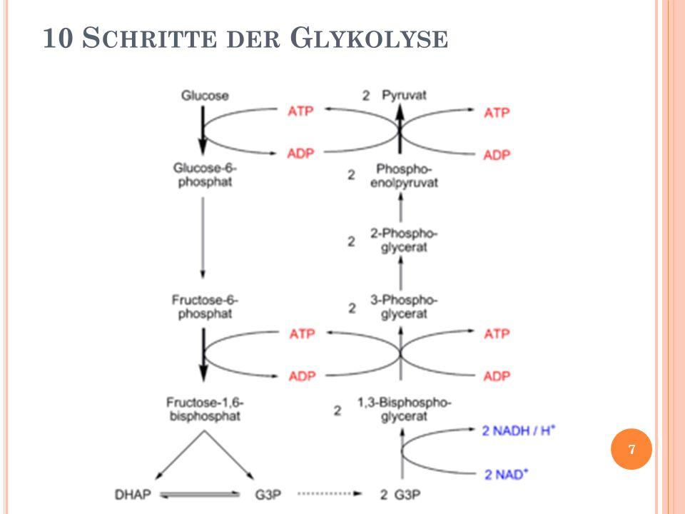10 Schritte der Glykolyse