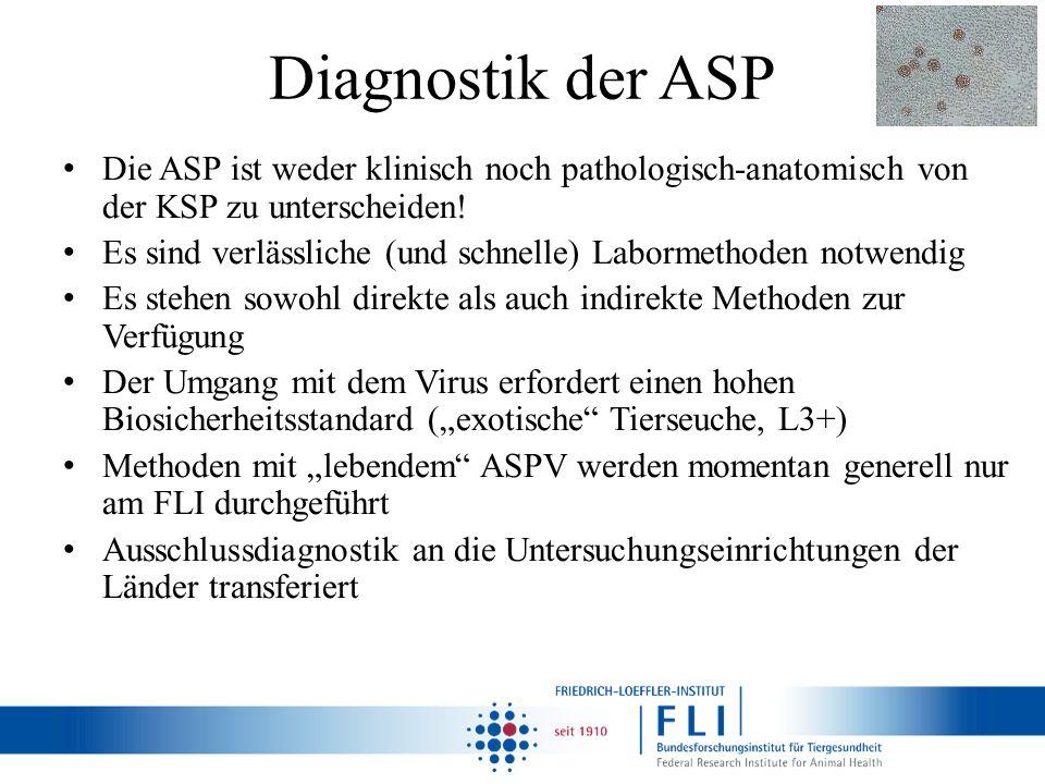 Diagnostik der ASP Die ASP ist weder klinisch noch pathologisch-anatomisch von der KSP zu unterscheiden!