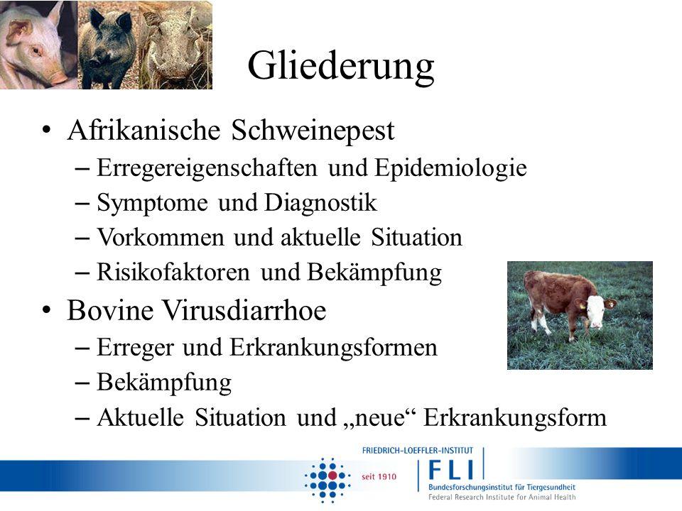Gliederung Afrikanische Schweinepest Bovine Virusdiarrhoe