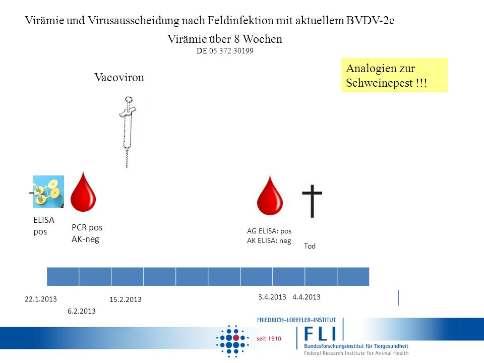 Virämie und Virusausscheidung nach Feldinfektion mit aktuellem BVDV-2c