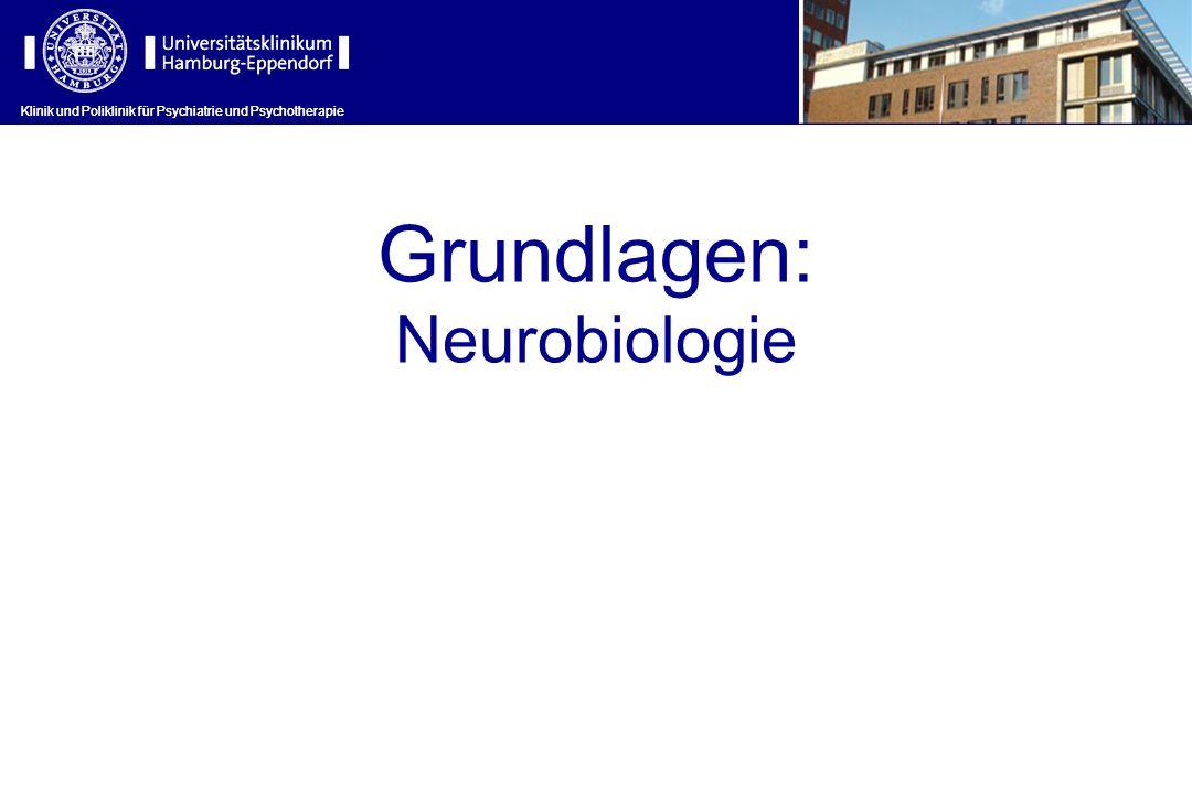 Grundlagen: Neurobiologie
