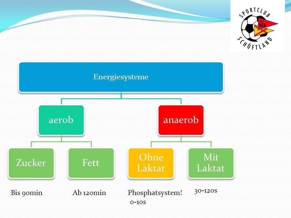 aerob Zucker Fett anaerob Ohne Laktat Mit Laktat Energiesysteme