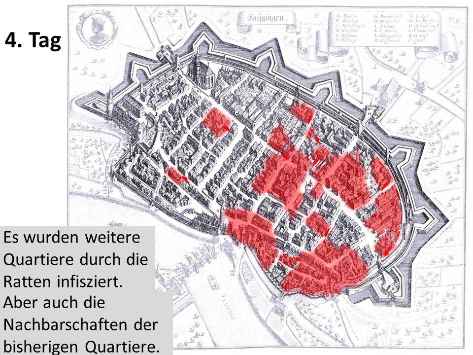 4. Tag Es wurden weitere Quartiere durch die Ratten infisziert.
