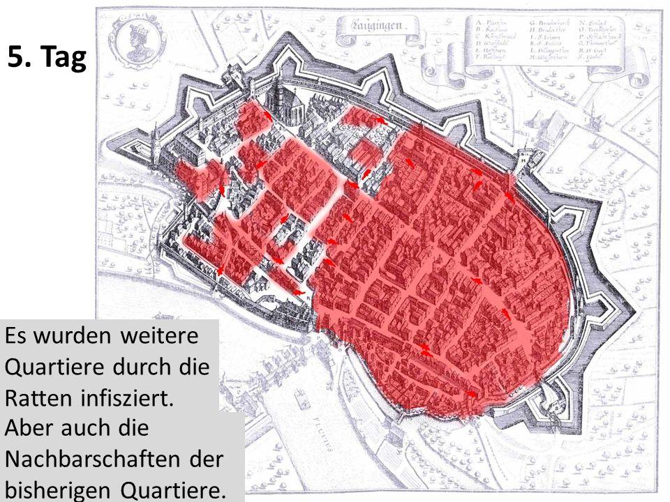 5. Tag Es wurden weitere Quartiere durch die Ratten infisziert.