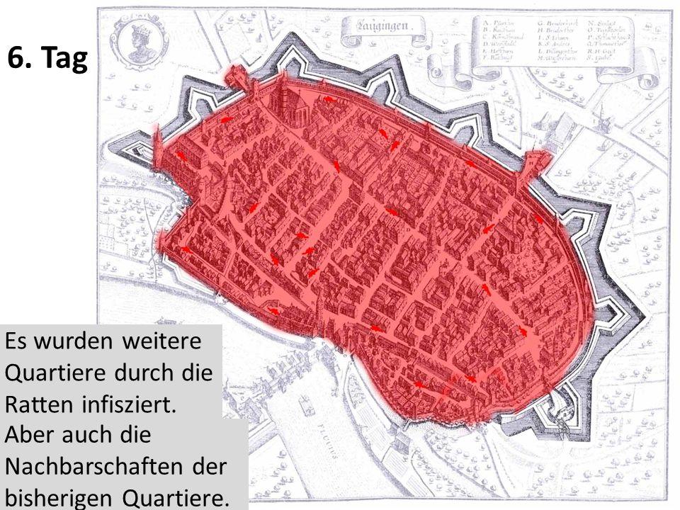 6. Tag Es wurden weitere Quartiere durch die Ratten infisziert.