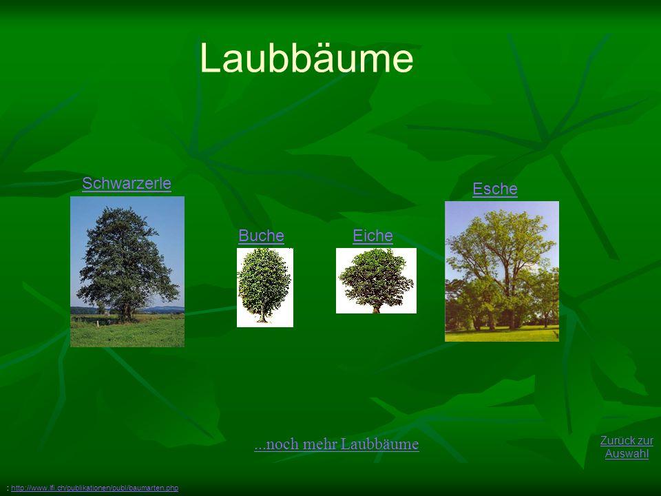 Laubbäume Schwarzerle Esche Buche Eiche ...noch mehr Laubbäume
