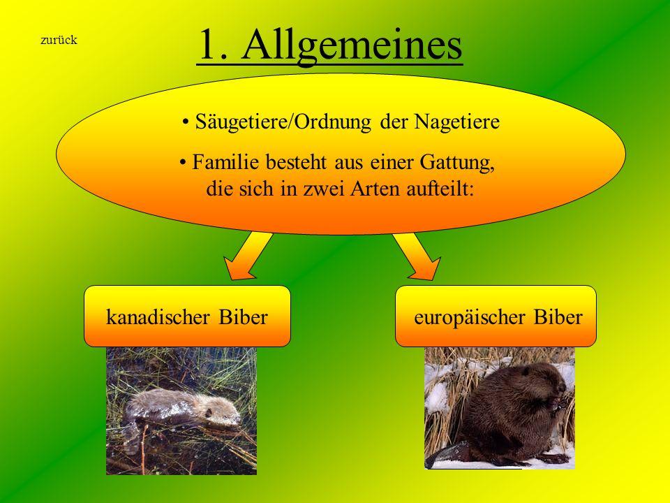 1. Allgemeines Säugetiere/Ordnung der Nagetiere