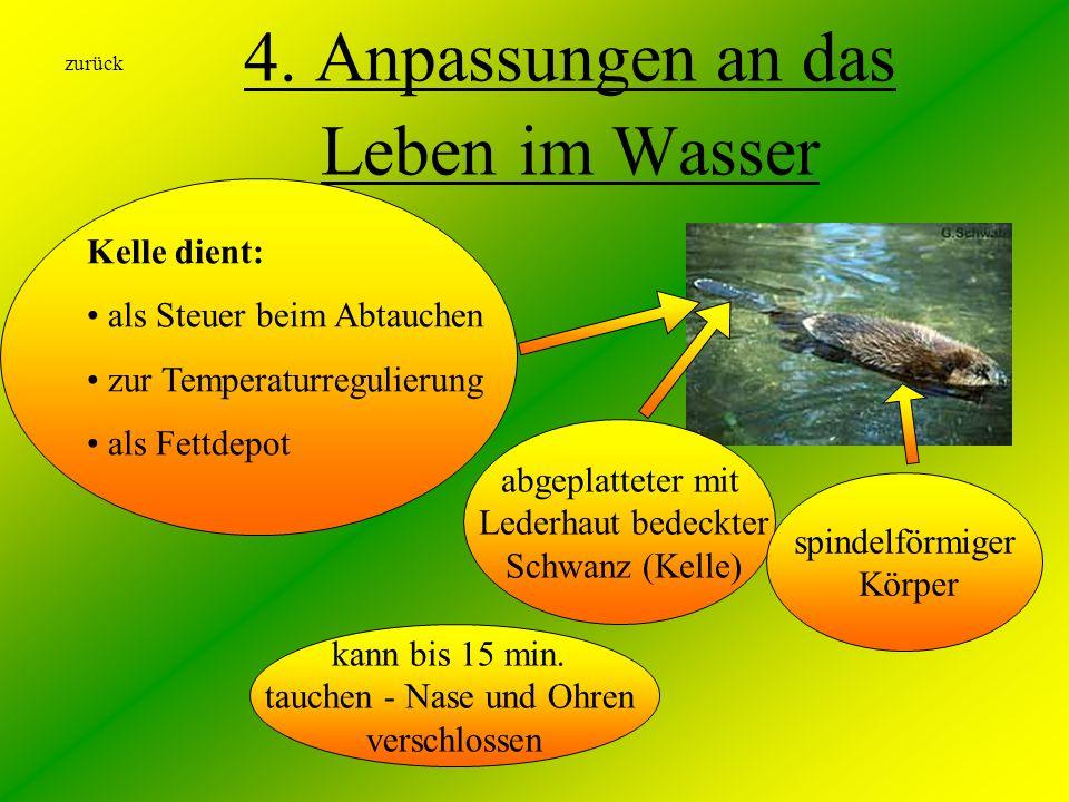 4. Anpassungen an das Leben im Wasser