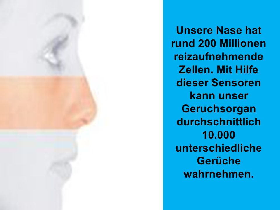 Unsere Nase hat rund 200 Millionen reizaufnehmende Zellen