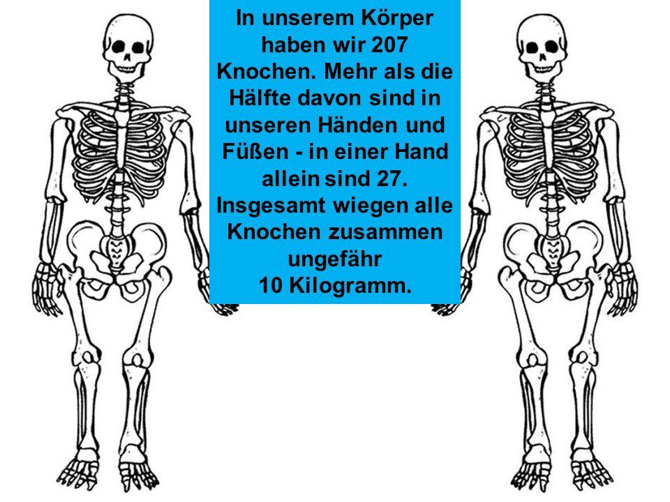 In unserem Körper haben wir 207 Knochen