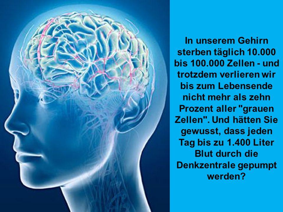 In unserem Gehirn sterben täglich 10. 000 bis 100