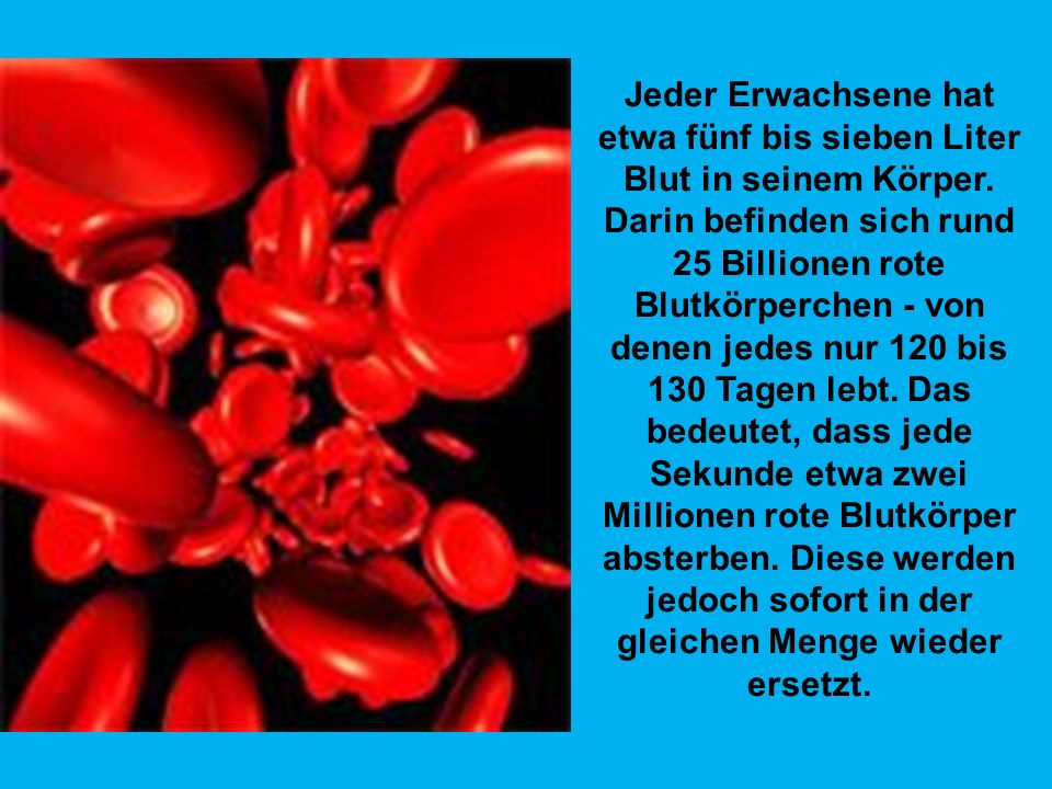 Jeder Erwachsene hat etwa fünf bis sieben Liter Blut in seinem Körper