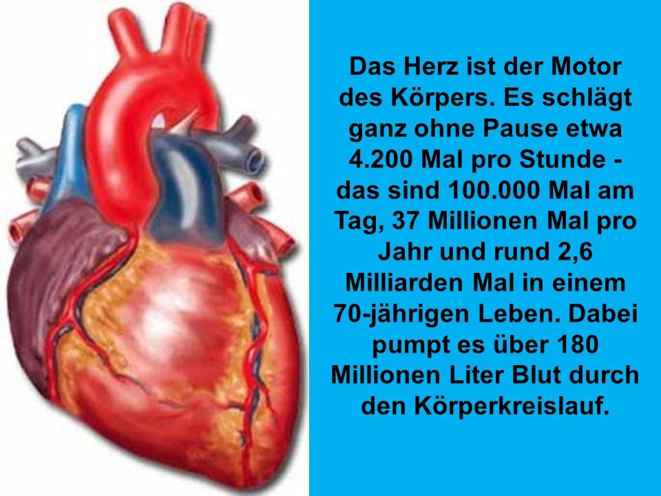 Das Herz ist der Motor des Körpers. Es schlägt ganz ohne Pause etwa 4