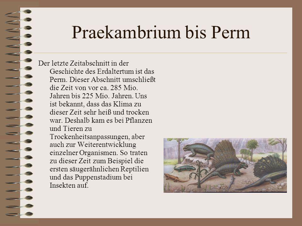 Praekambrium bis Perm