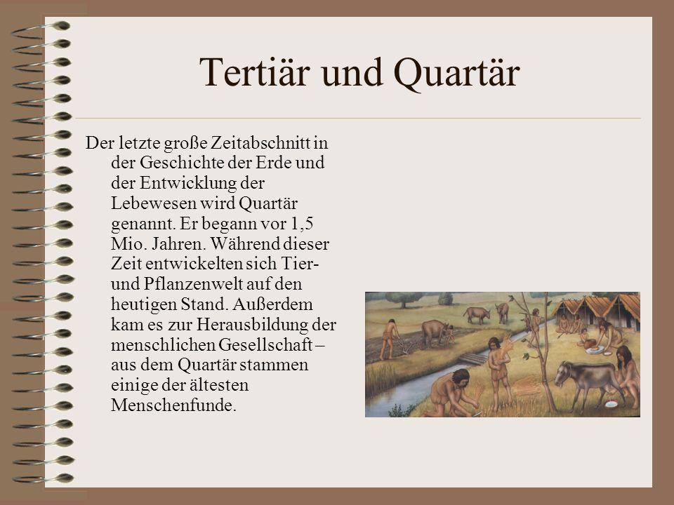 Tertiär und Quartär