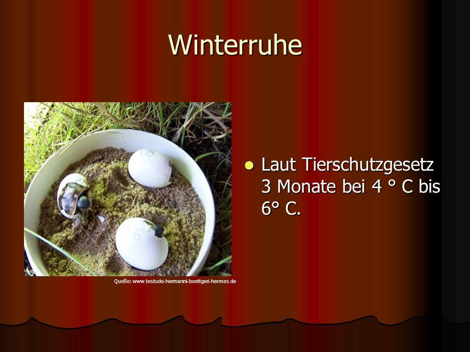 Winterruhe Laut Tierschutzgesetz 3 Monate bei 4 ° C bis 6° C.