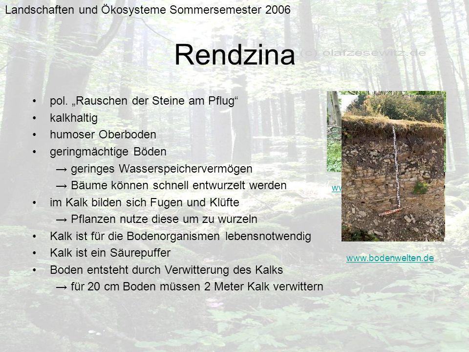 Rendzina Landschaften und Ökosysteme Sommersemester 2006