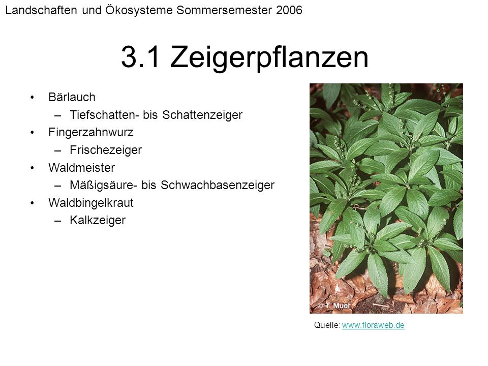 3.1 Zeigerpflanzen Landschaften und Ökosysteme Sommersemester 2006