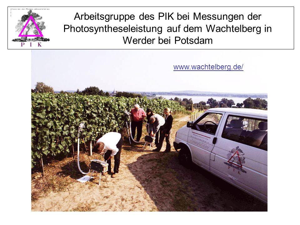 Messung der Photosyntheseleistung im Weinberg auf dem Wachtelberg in Werder a.d.Havel, 2002