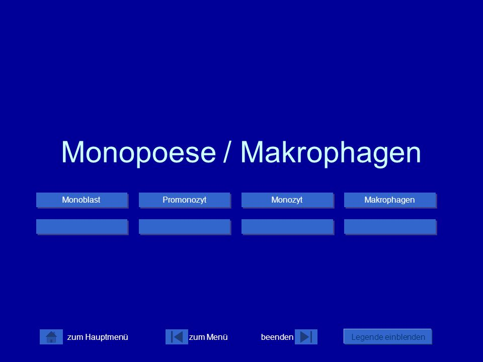 Monopoese / Makrophagen