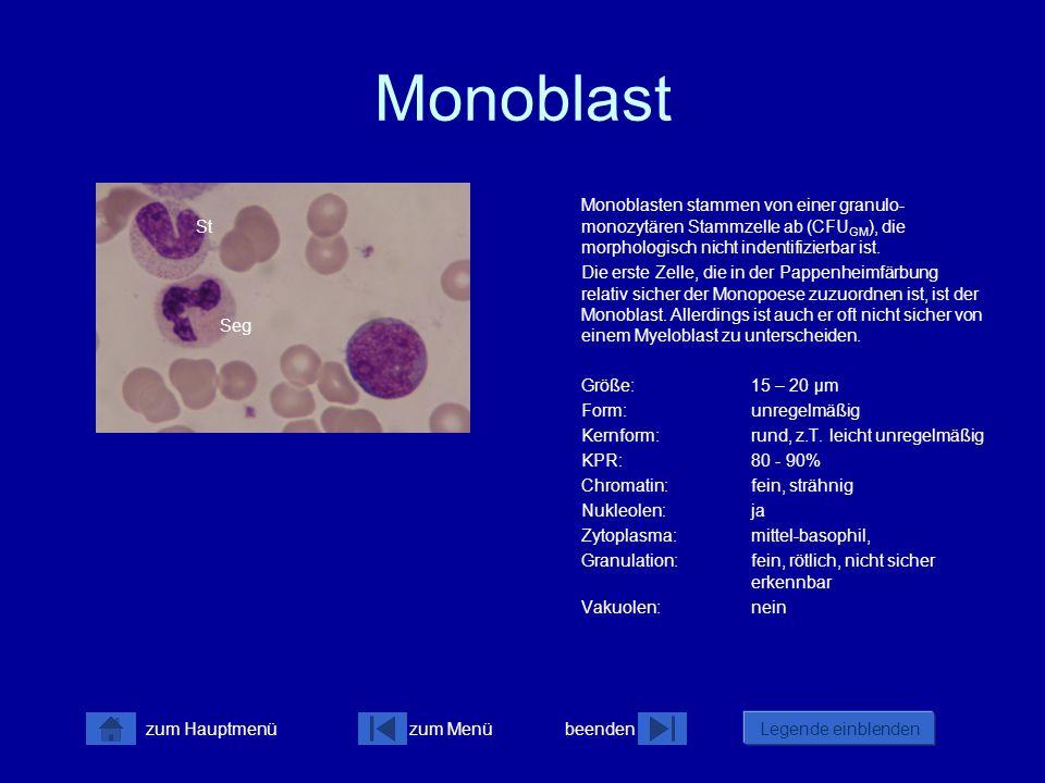 Monoblast Monoblasten stammen von einer granulo-monozytären Stammzelle ab (CFUGM), die morphologisch nicht indentifizierbar ist.