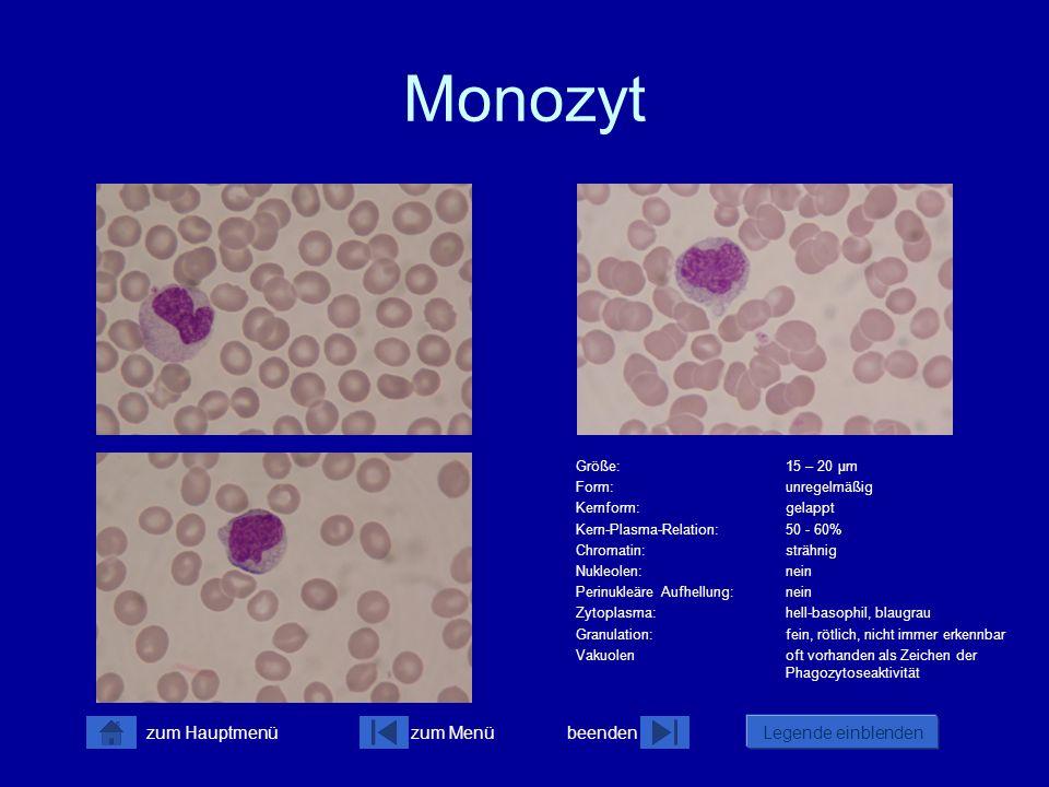 Monozyt Größe: 15 – 20 µm Form: unregelmäßig Kernform: gelappt