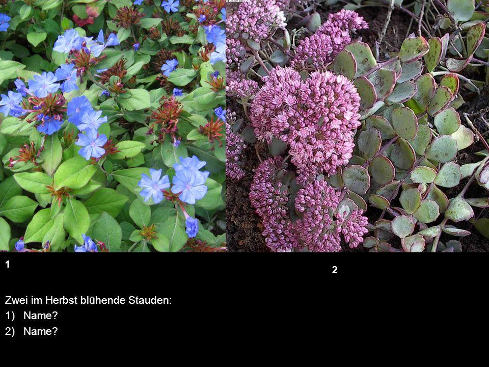 sommerflor wie heisst diese pflanze wie hoch wird sie ungef hr ppt video online herunterladen. Black Bedroom Furniture Sets. Home Design Ideas